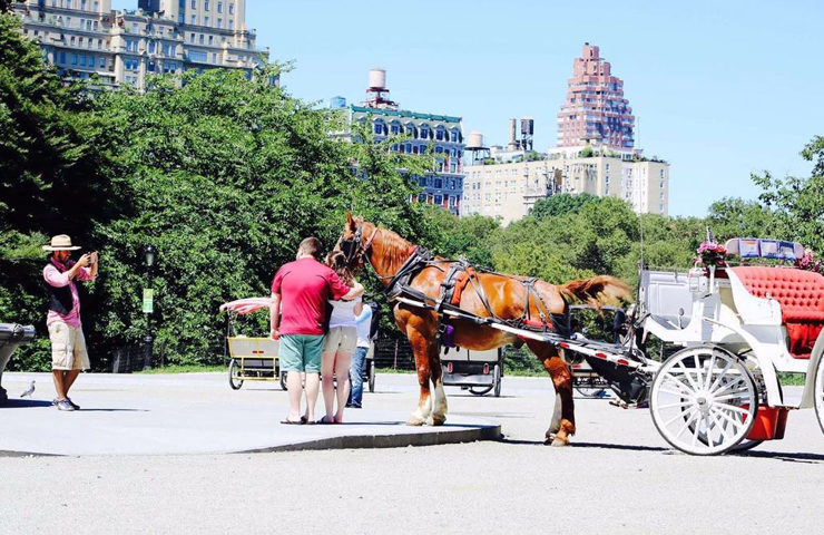 Horse And Carriage Ride NYC