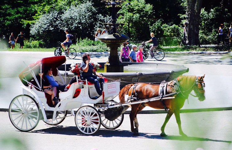 central park carriage tours central park horse carriage tour. Black Bedroom Furniture Sets. Home Design Ideas